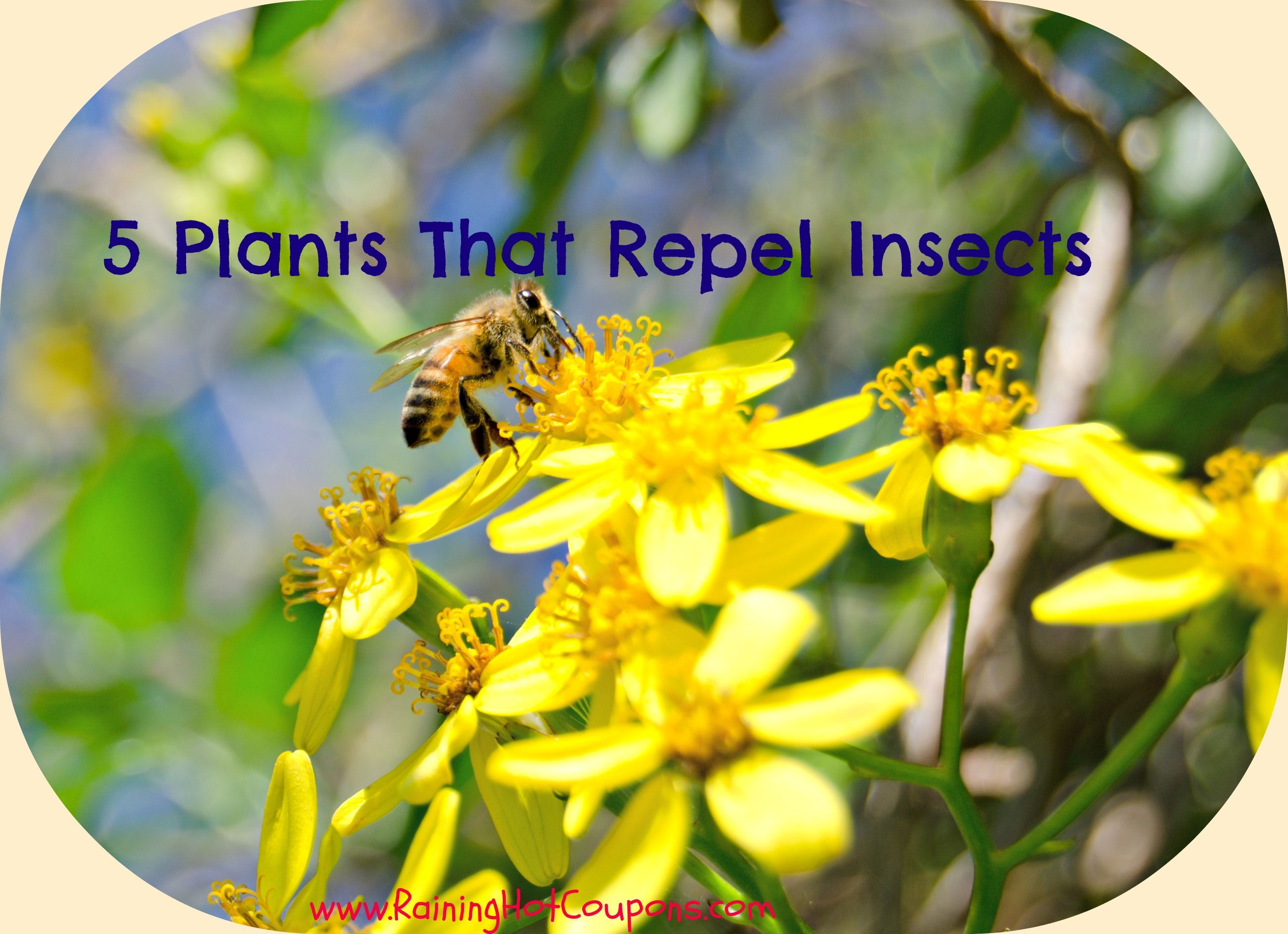 5 Plants That Repel Insects Insect repellent plants
