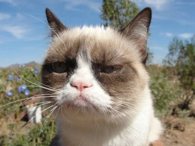 grumpy cat is grumpy https://www.facebook.com/magicalplaceoninternet/photos/a.774341029287988.1073741828.774016329320458/856032031118887/?type=1&theater funny lol wtf humor meme happy