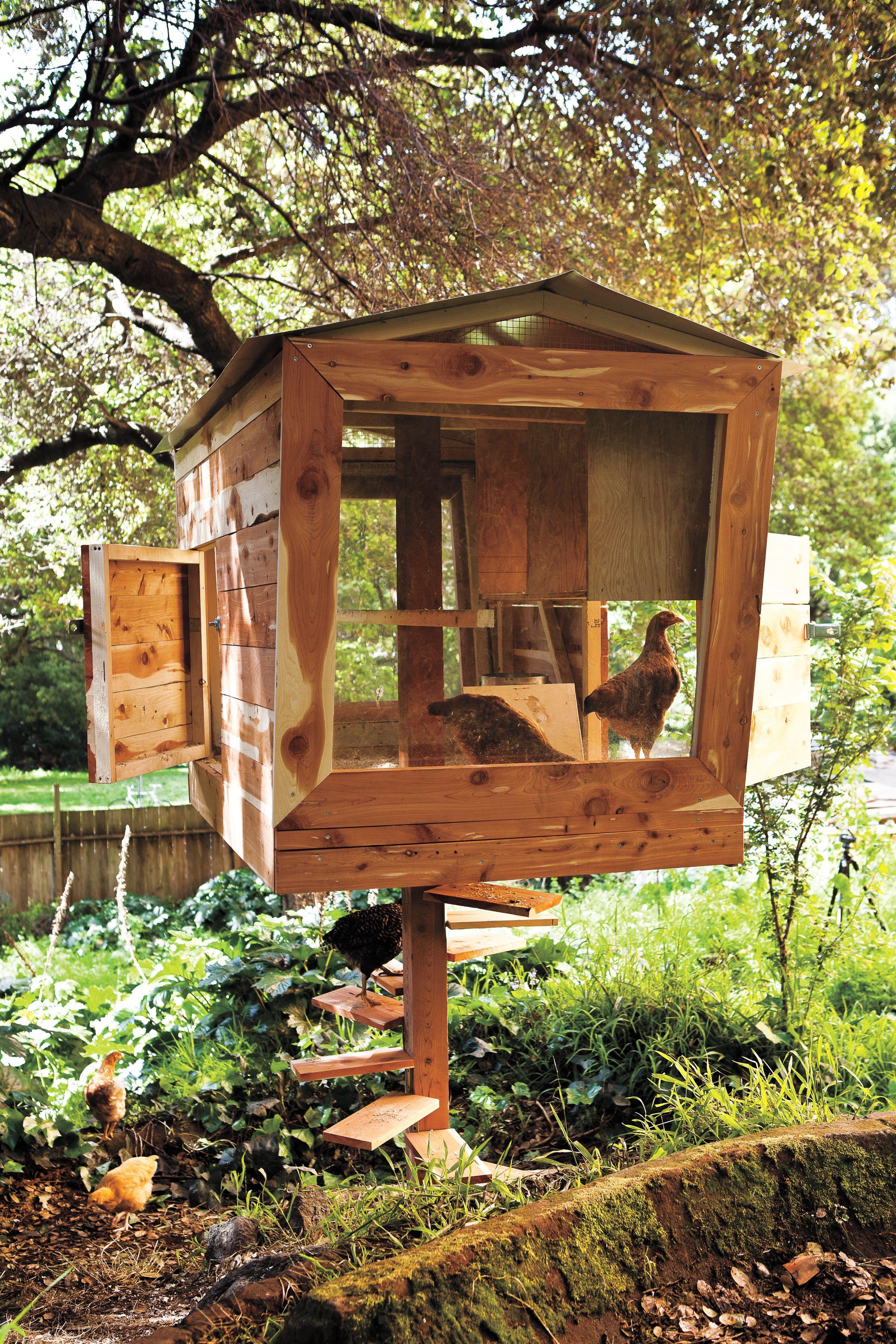 Backyard Chicken Coop Plans Backyard Chicken Coops: Chickens Backyard, Chicken Coop Plans, Backyard Chicken Coops