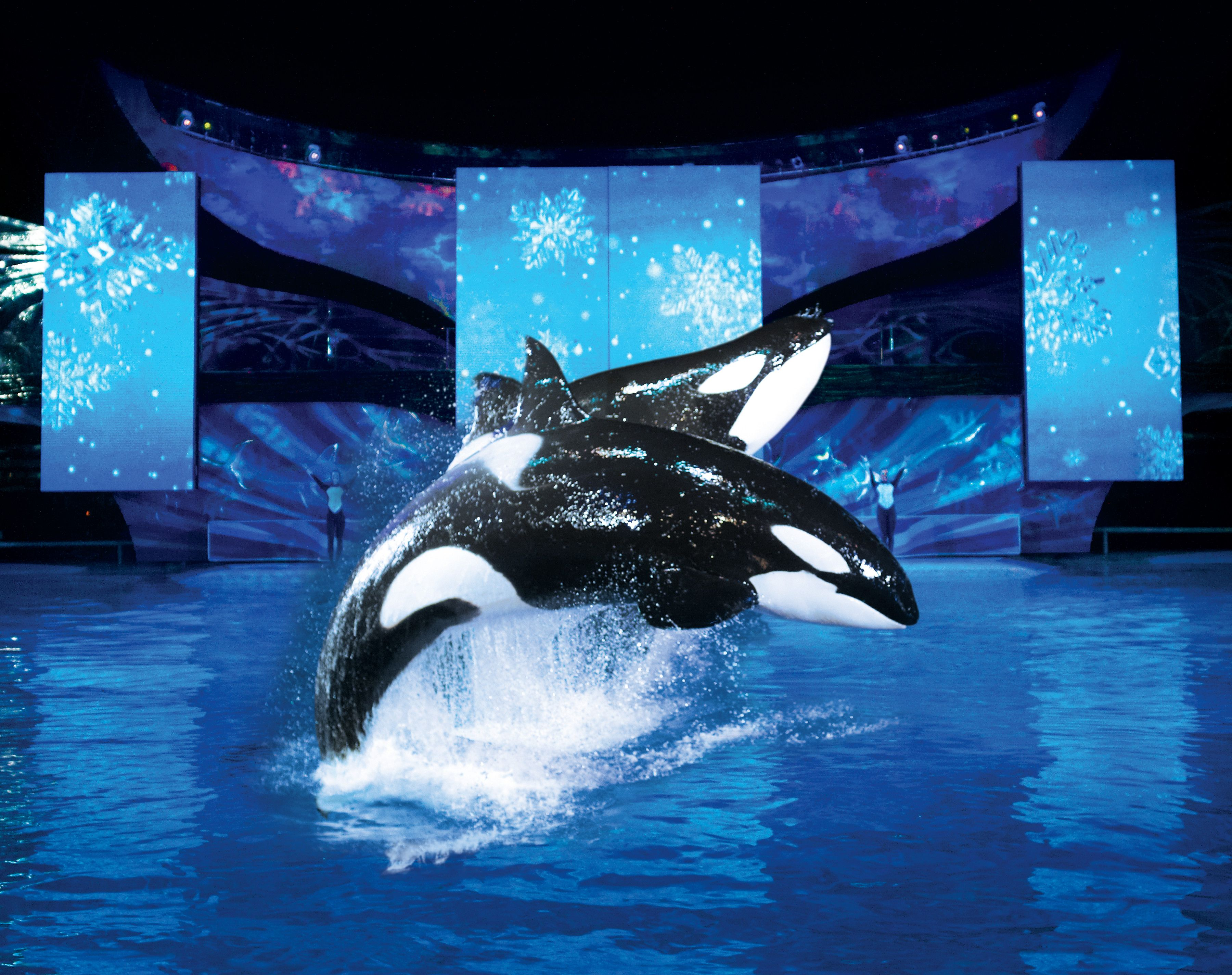 Christmas at SeaWorld Orlando