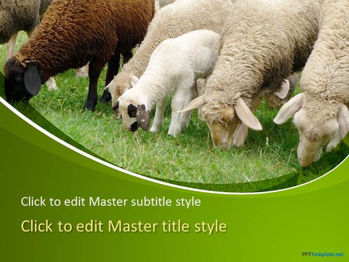 Free sheep ppt template is an informative presentation theme that free sheep ppt template is an informative presentation theme that is available for download on the toneelgroepblik Images