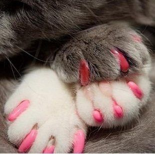 kitty manicure.... @Lindsey Daley and @Leslie Dawson  :)