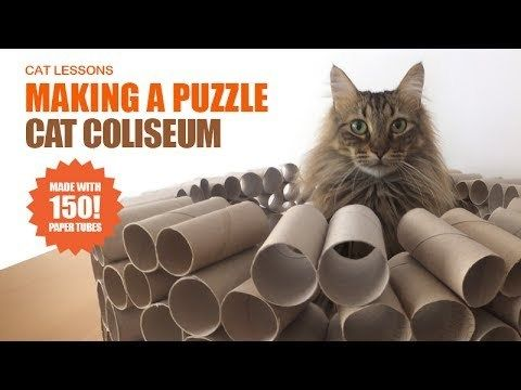 How To Make A Mega Cat Puzzle Toy From Toilet Paper Rolls Http Ibeebz Com Cat Puzzle Diy Cat Toys Interactive Cat Toys