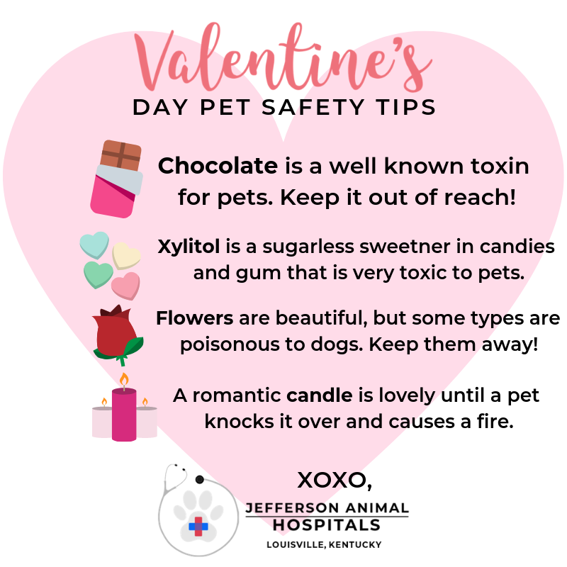Happy Valentine S Day To You And Your Loved Ones Here Are Some Tips To Keep This Day Of Love A Safe One For Your Pet Emergency Animal Hospital Veterinary Care