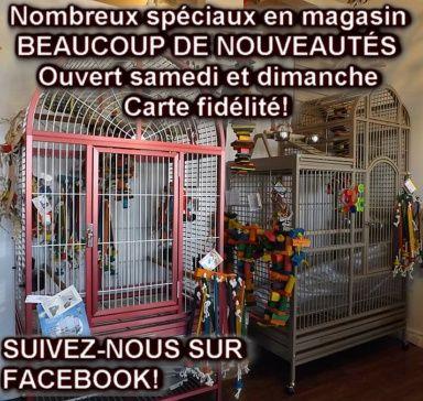Jouet pour perroquet ROSIE (fabricant du Québec)