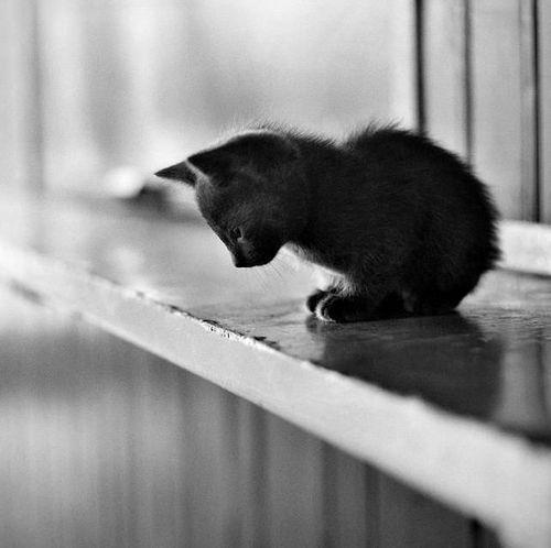 too high for a kitten