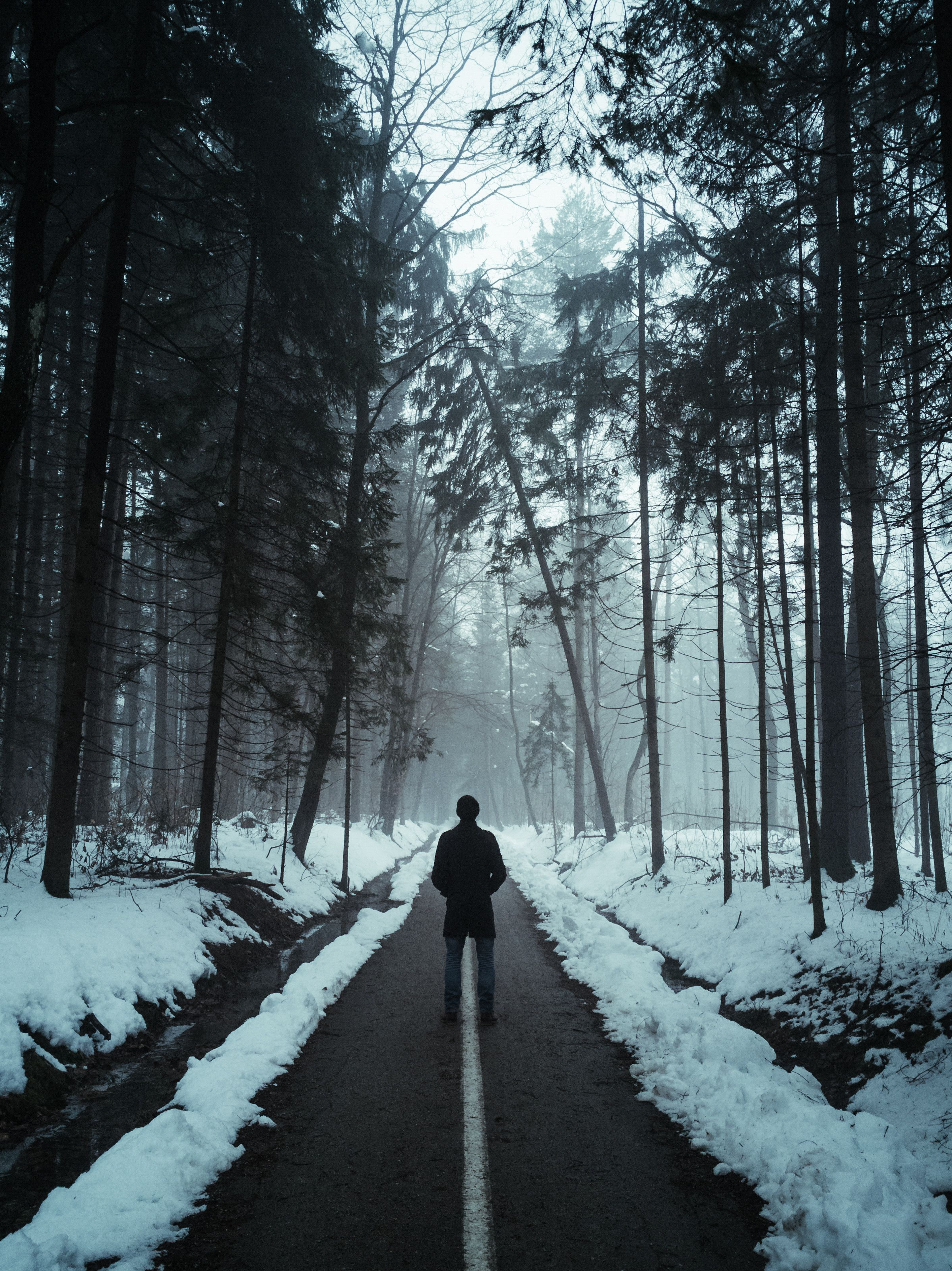 Free photos cold dawn daylight environment free stock