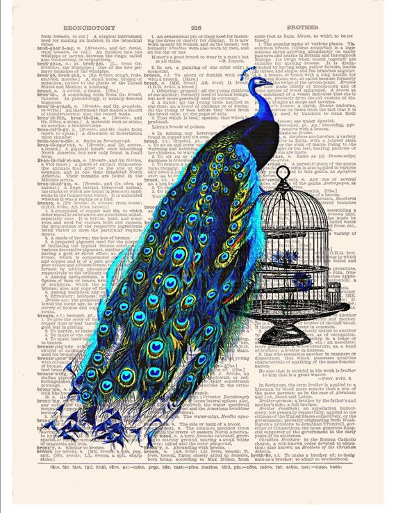 Peacock Art Print on Antique Dictionary Book Page Bird Cage Wall Decor Picture