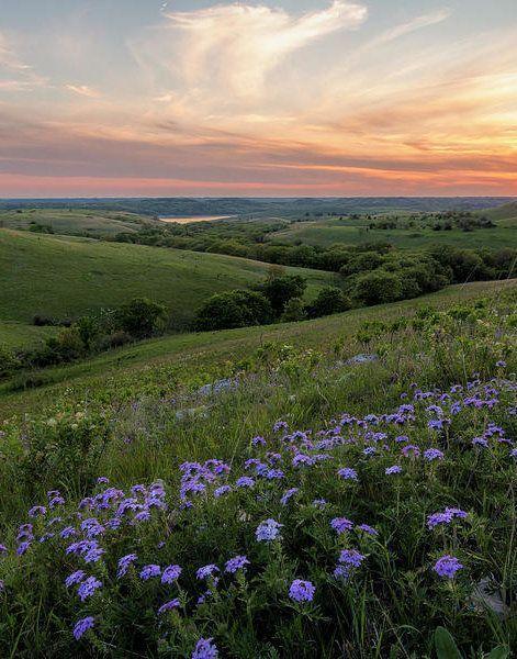 Prairie In Bloom Poster by Scott Bean