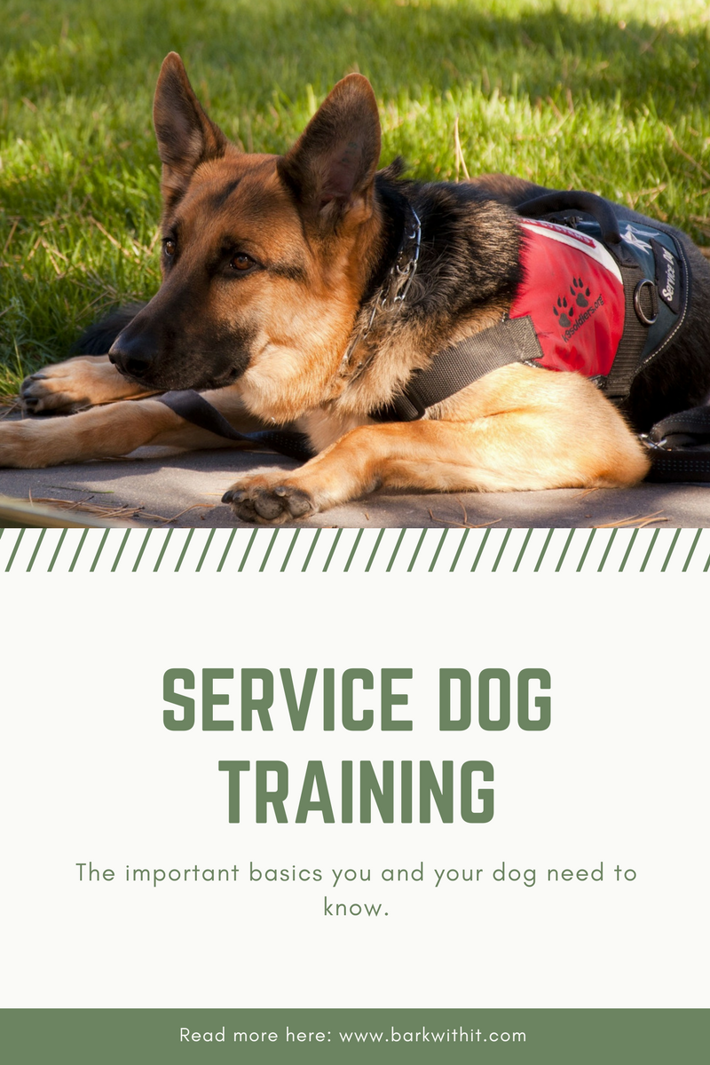 Service Dogs Service Dog Training How To Train A Service Dog Train Service Puppy Service Dog Training Dog Training Obedience Service Dogs