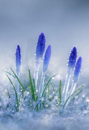 Pin Oleh Troy Knudson Di Flowers Fleurs Fotografi Alam Bunga Kebun Bunga