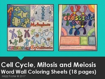 Cell Cycle, Mitosis, Meiosis Word Wall Coloring Sheets (18 pgs ...