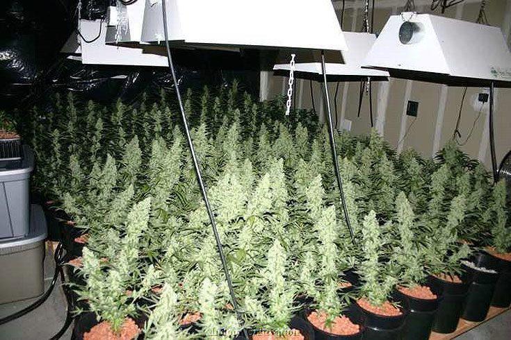 Indoor grow-op Marijuana Pinterest Cannabis