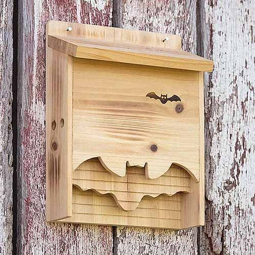 Photo of How to Build a Bat Box with DIY Instructions | Gardener's Path