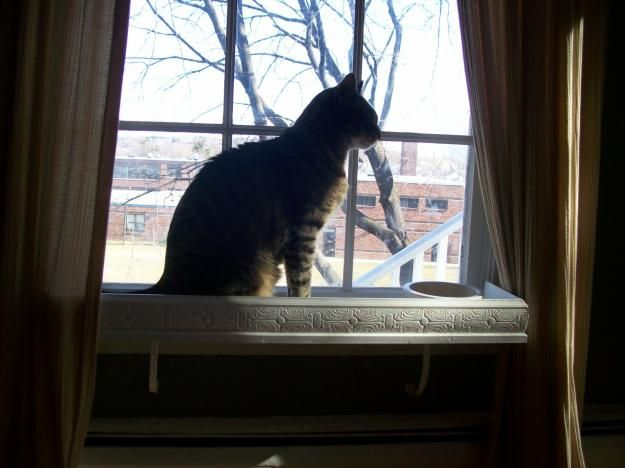 Pictures of  kitty or garden window shelf