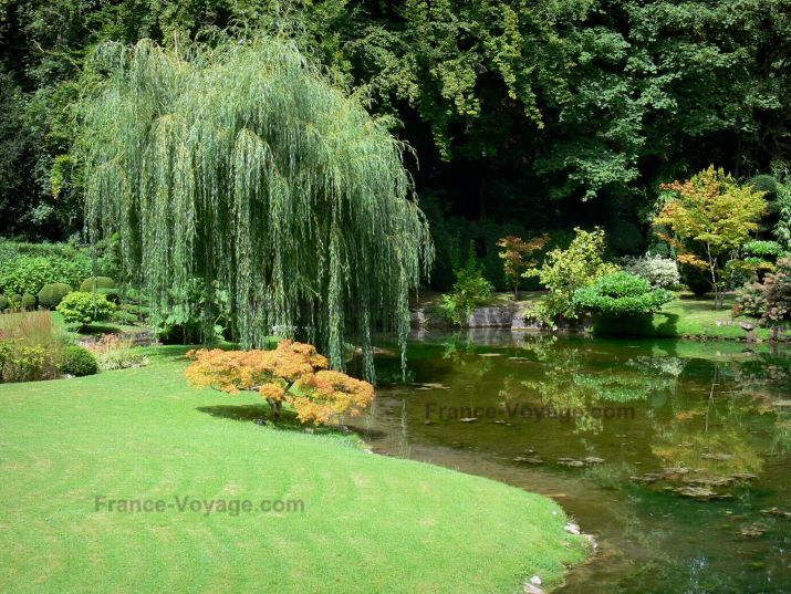 Japanese garden plant list de courances plants and for Japanese garden bushes