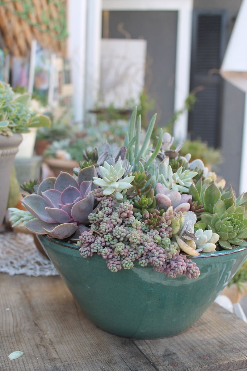 Succulents Are Eco Friendly As Well As Pet Friendly Great 400 x 300