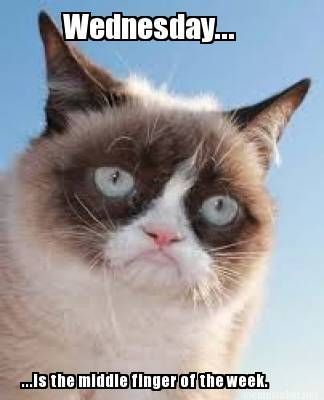 Grumpy Cat's view on Wednesdays :) - Tap the link now to see all of our  cool cat collections! | Funny grumpy cat memes, Grumpy cat humor, Grumpy cat