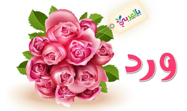 معنى أسم ورد Rose Flowers Plants