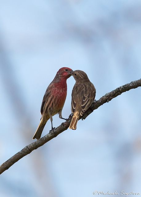 House Finch Cute Wild Animals Beautiful Birds Birds