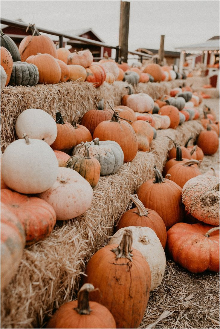 Shaina // Idaho Farmstead Fall Inspired Session- Boise Senior Photographer #pumpkinpatchoutfit