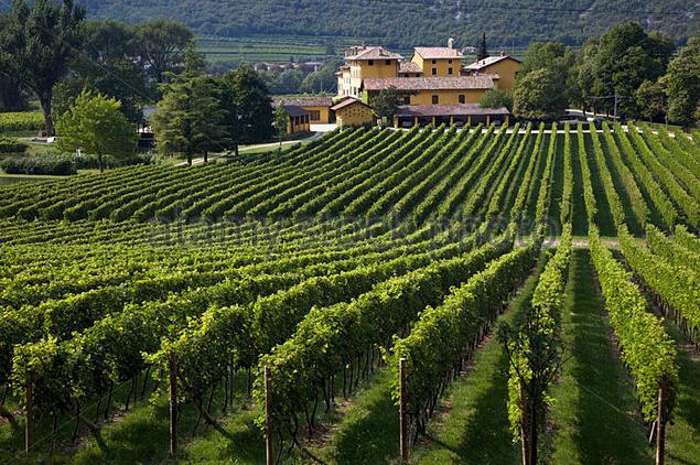 """""""Oggi, infatti, quello che è una delle prerogative di San Leonardo è la continuità oramai storica del personale, che è qui da generazioni e si continua così, condividendo la passione. E' come una grande famiglia, tramandiamo generazione dopo generazione i gesti e l'amore per il vino. Spesso organizziamo anche degustazioni di altri vini con il personale perché voglio che loro capiscano cosa si produce intorno a noi, e se ci sono dei vini di qualità, dobbiamo conoscerli."""""""