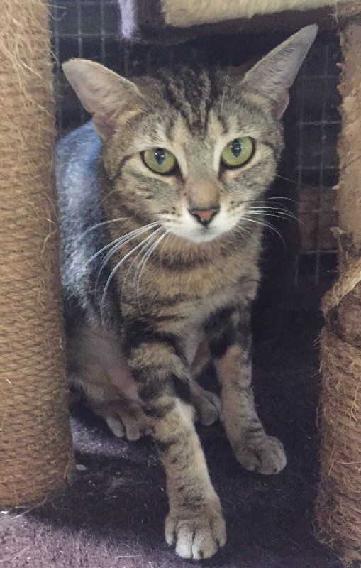 Hey There I M Kylie Kwong I Ve Had A Tough Start To Life But I M Looking Forward To The Future I M In Cairns Can You Come A Animals Adoption Animal Welfare
