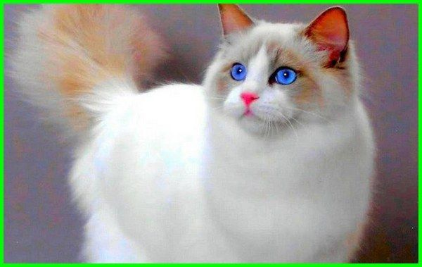 Gambar Kucing Lucu Imut Dan Paling Menggemaskan Sedunia Kucing Lucu Foto Kucing Lucu Gambar Kucing Lucu