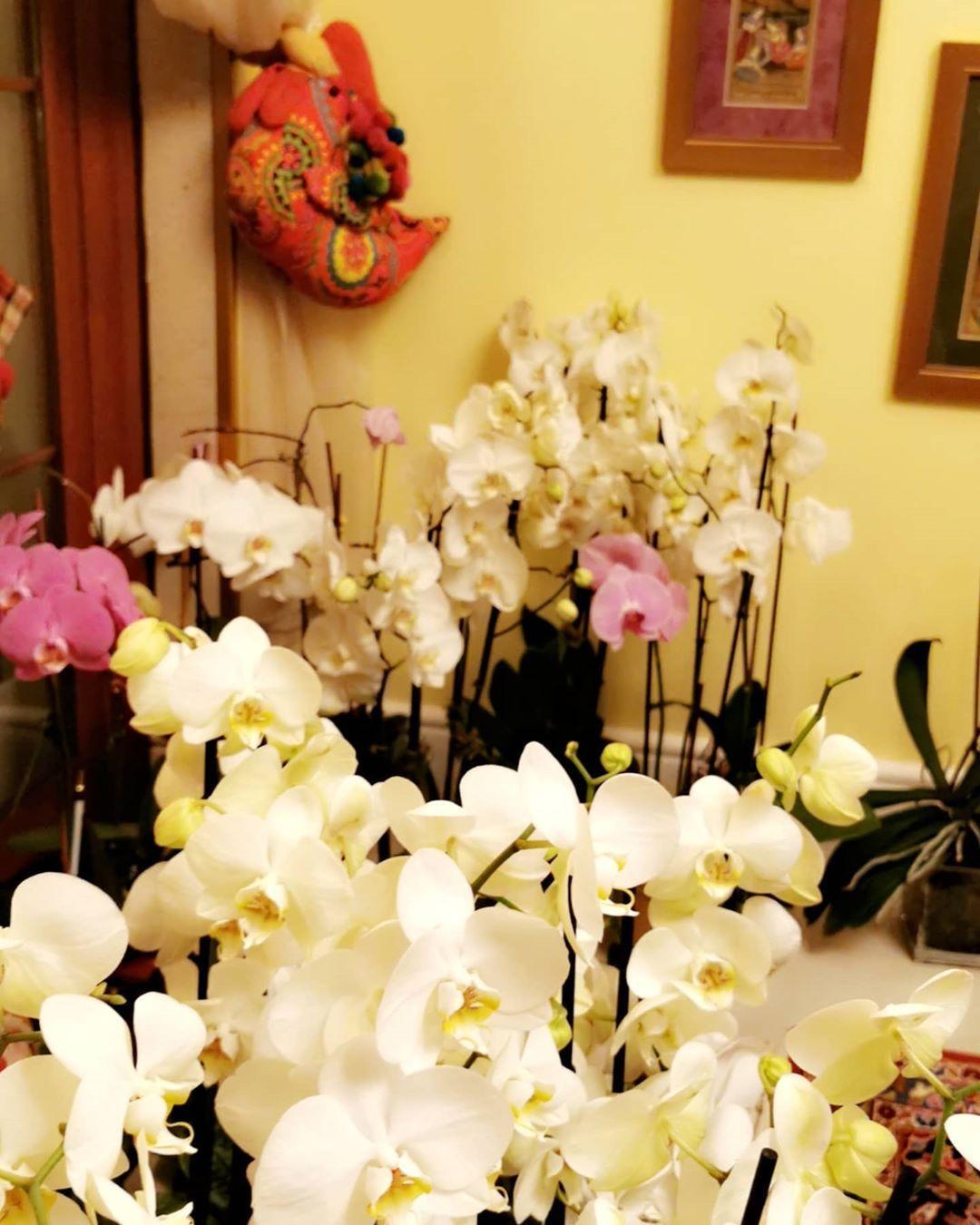 حطوا الورد الطبيعي في بيتكم فعلا يجدد الطاقه والمكان وفي ورد يظل Plants