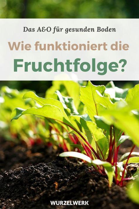 Fruchtfolge planen im Gemüsegarten – Starkzehrer, Mittelzehrer, Schwachzehrer - Wurzelwerk