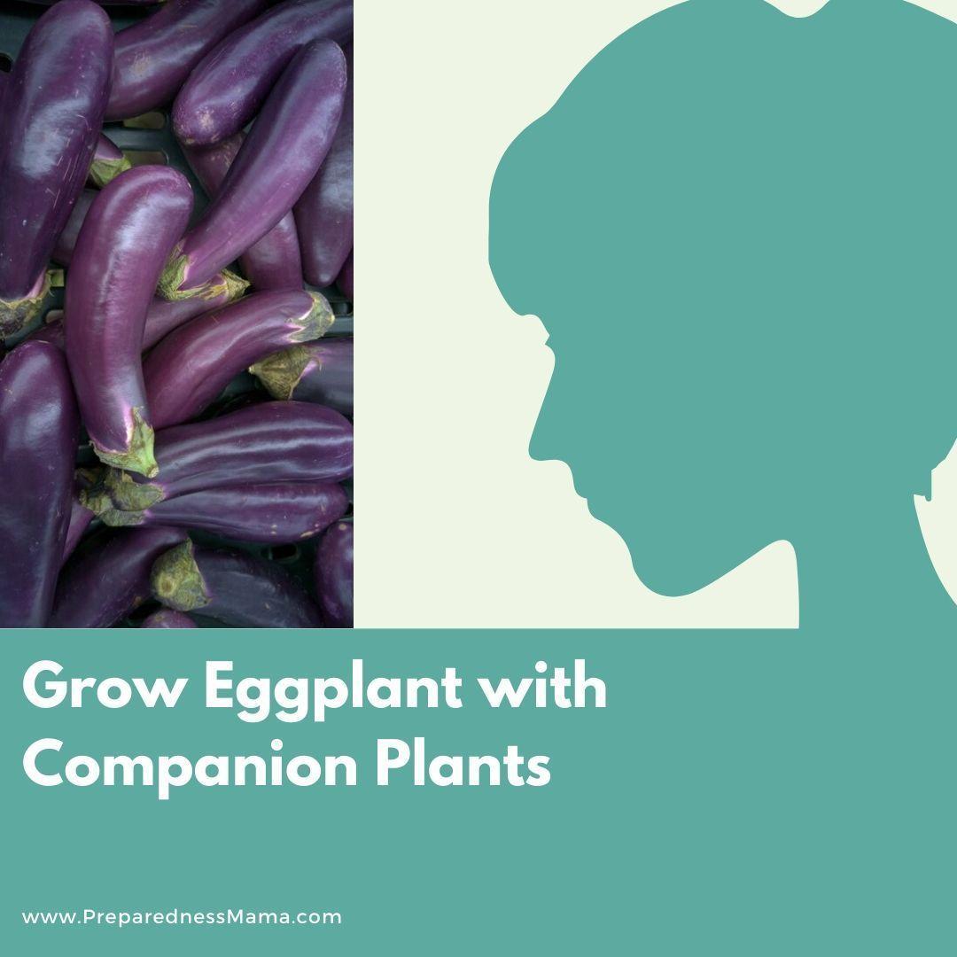Growing Eggplant Gardens #growing #eggplant & Growing