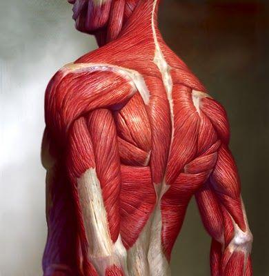 Víctor Ezquerro Páez: Anatomía artística | imagenes | Pinterest ...