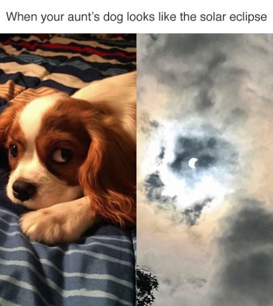 Photo of best-photo-ever-of-dog-looks-like-solar-eclipse.jpg 550×617 pixels