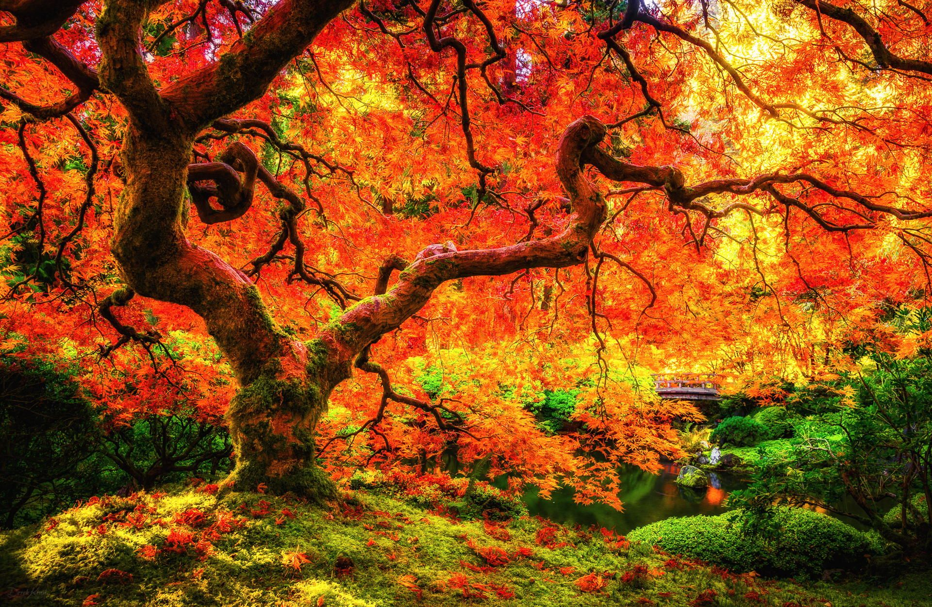 """""""The Tree"""" photography by Derek Kind (Taken on October"""