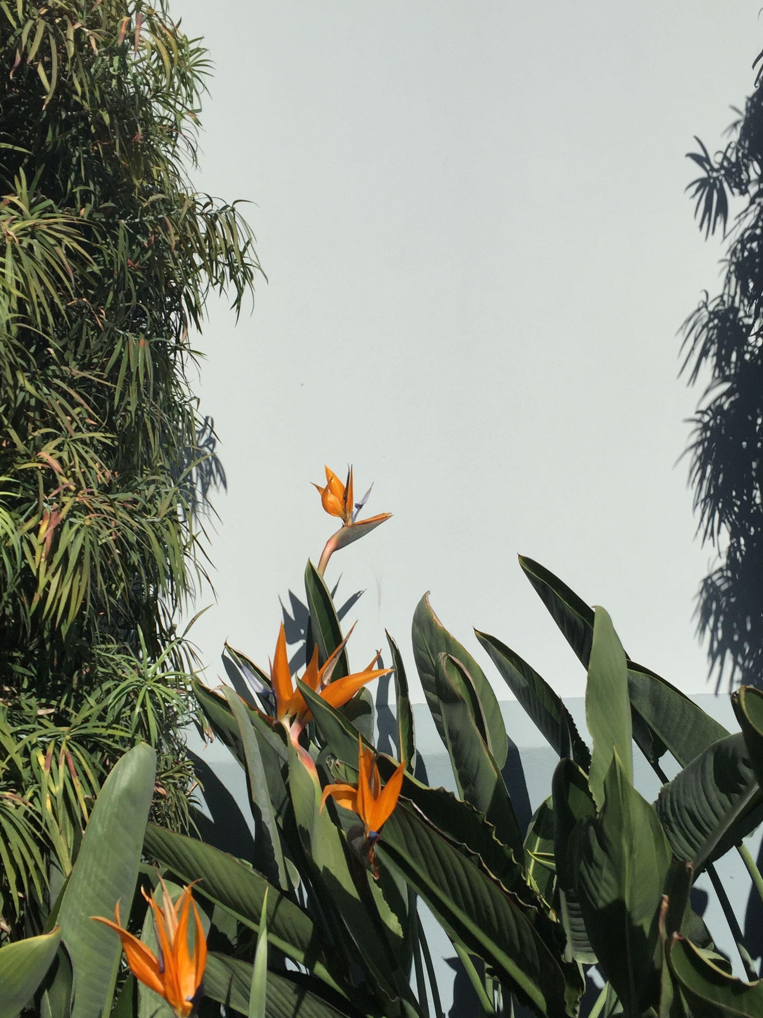 Amazing Green Aesthetic Plants