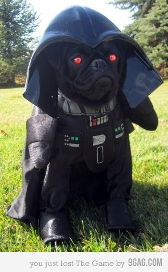 Darth Dog Sean And Ben Are In Stitches Right Now Looking At