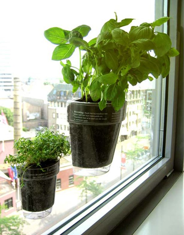 you've got to see these window planters with suction cups for your