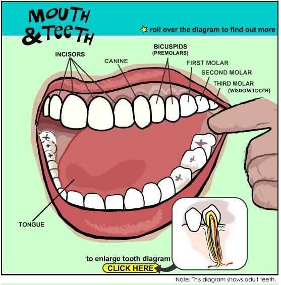Pin by Melanie Pugh, DMD, PA on Dental Health   Dental