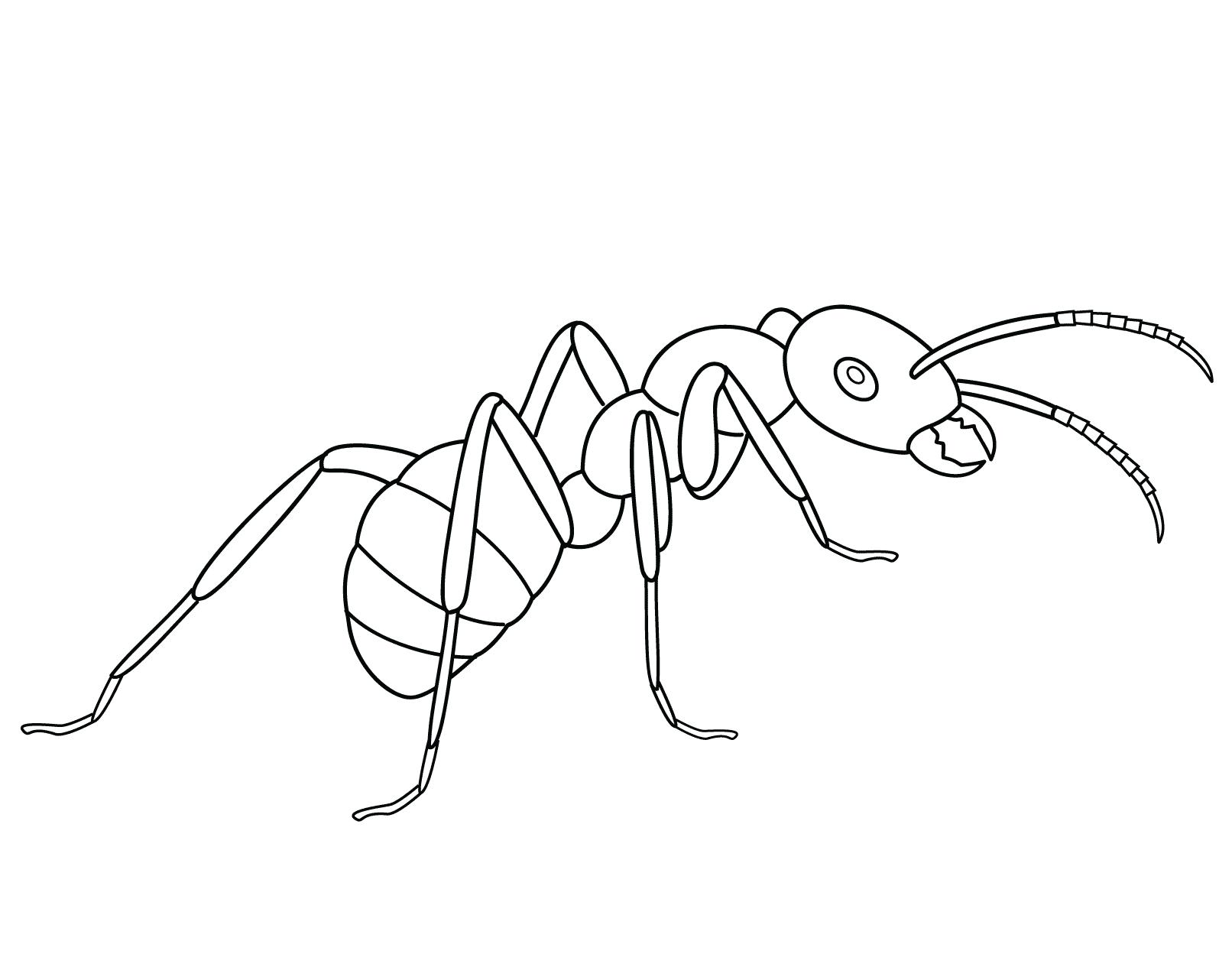 Черно-белая картинка муравей