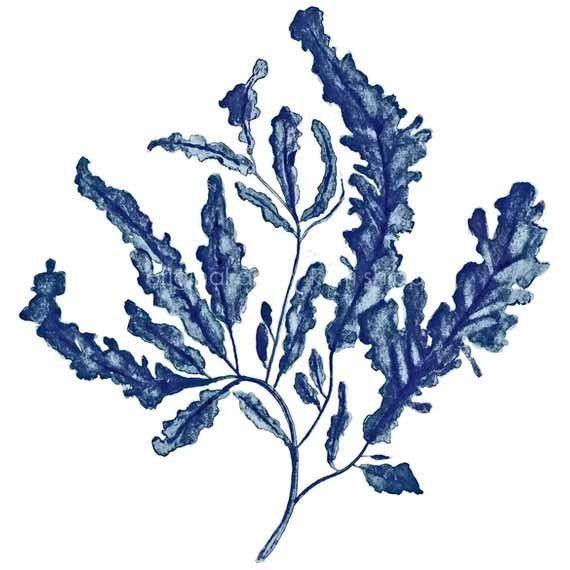 Seaweed in Denim Print 8x10 - Sea Life Art Print - Blue ...