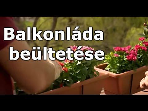 társkereső oldal kertészek mentális randevú jake gyllenhaal ing