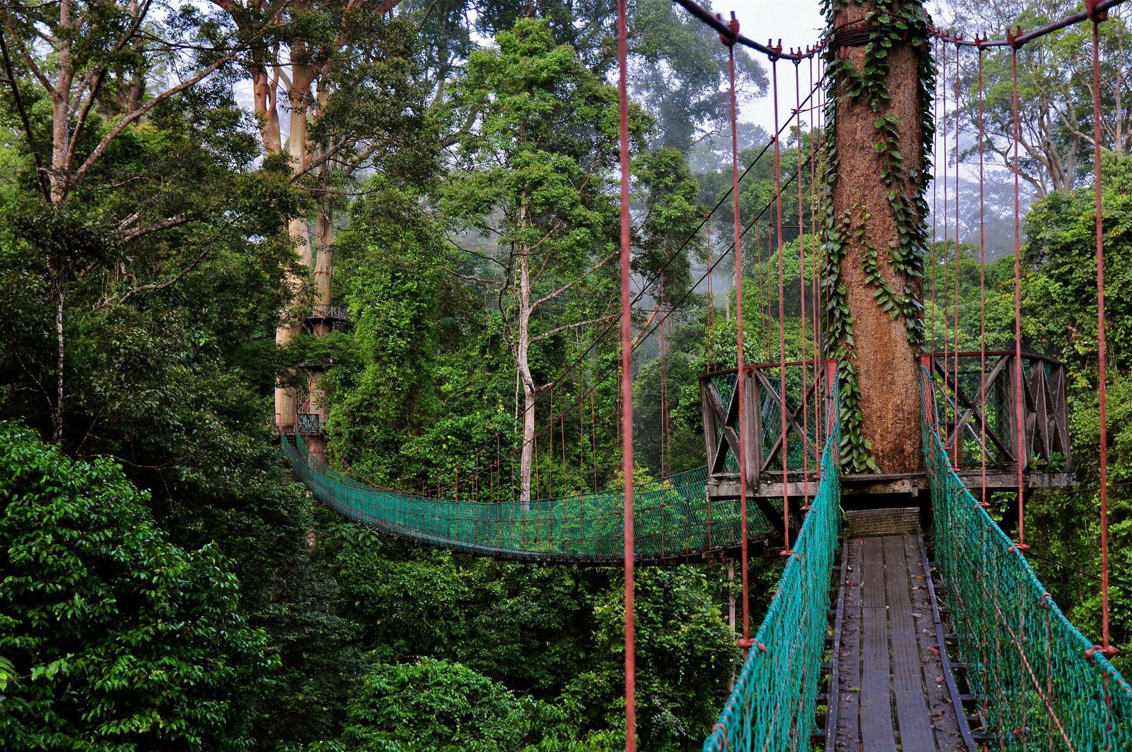 Borneo Rainforest Canopy Walkway in Malaysia & Borneo Rainforest Canopy Walkway in Malaysia | Places Iu0027d Like to ...