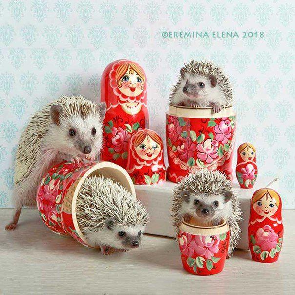 Art. Elena Eremina ♥ | Ежонок, Ежики, Самые милые животные