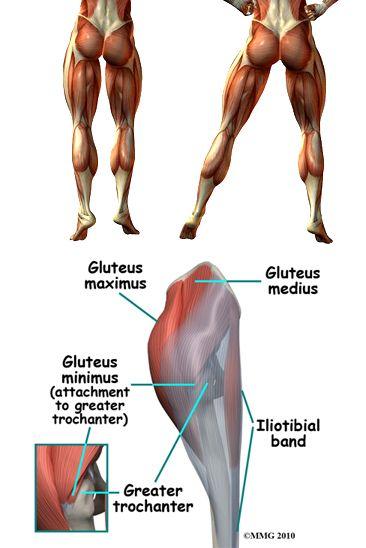 Liftn It Roll A Double Juicy Glutes Anatomy Work Like A Beast