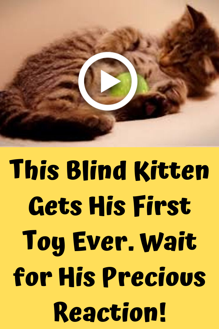 This Blind Kitten Gets His First Toy Ever Wait For His Precious Reaction Cute Birds Kitten Funny Cat Videos