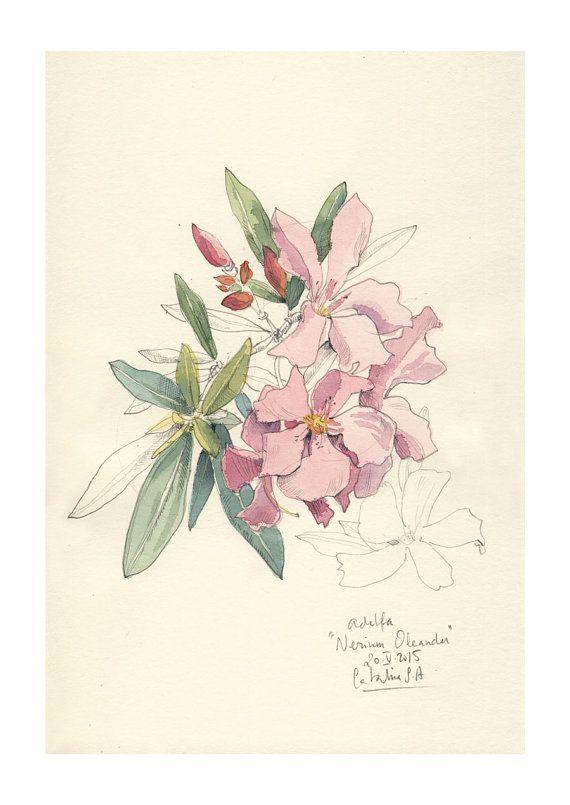 Nerium Oleander Watercolor Pencil Drawing Pink Flowers Print
