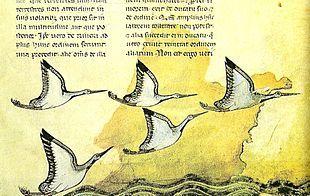 "Frederick II - Detail of page 16-recto of ""De arte venandi cum avibus"" written by Frederick.Wikipedia"