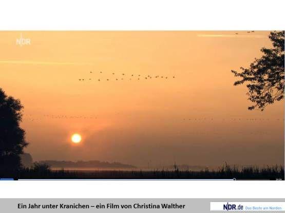 Bilder, Aquarelle vom Meer & mehr - von Frank Koebsch | Meine Aquarelle, Pastelle und Fotos entstehen meist im Mecklenburg Vorpommern. Ich b...