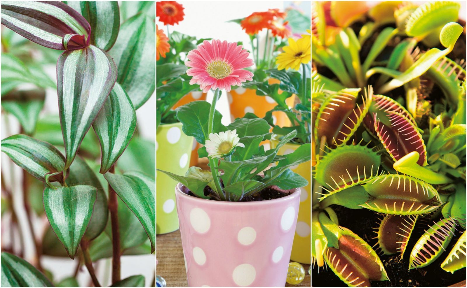 12 of the best plants for children's bedrooms with images