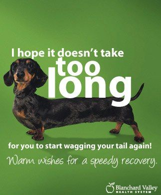 Yeah Photo Via Dachshund Rescue South Florida On Fb Wire
